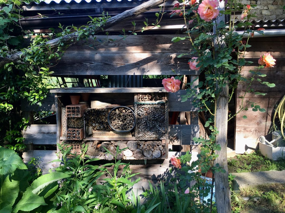 Bienenhaus mit Rosen