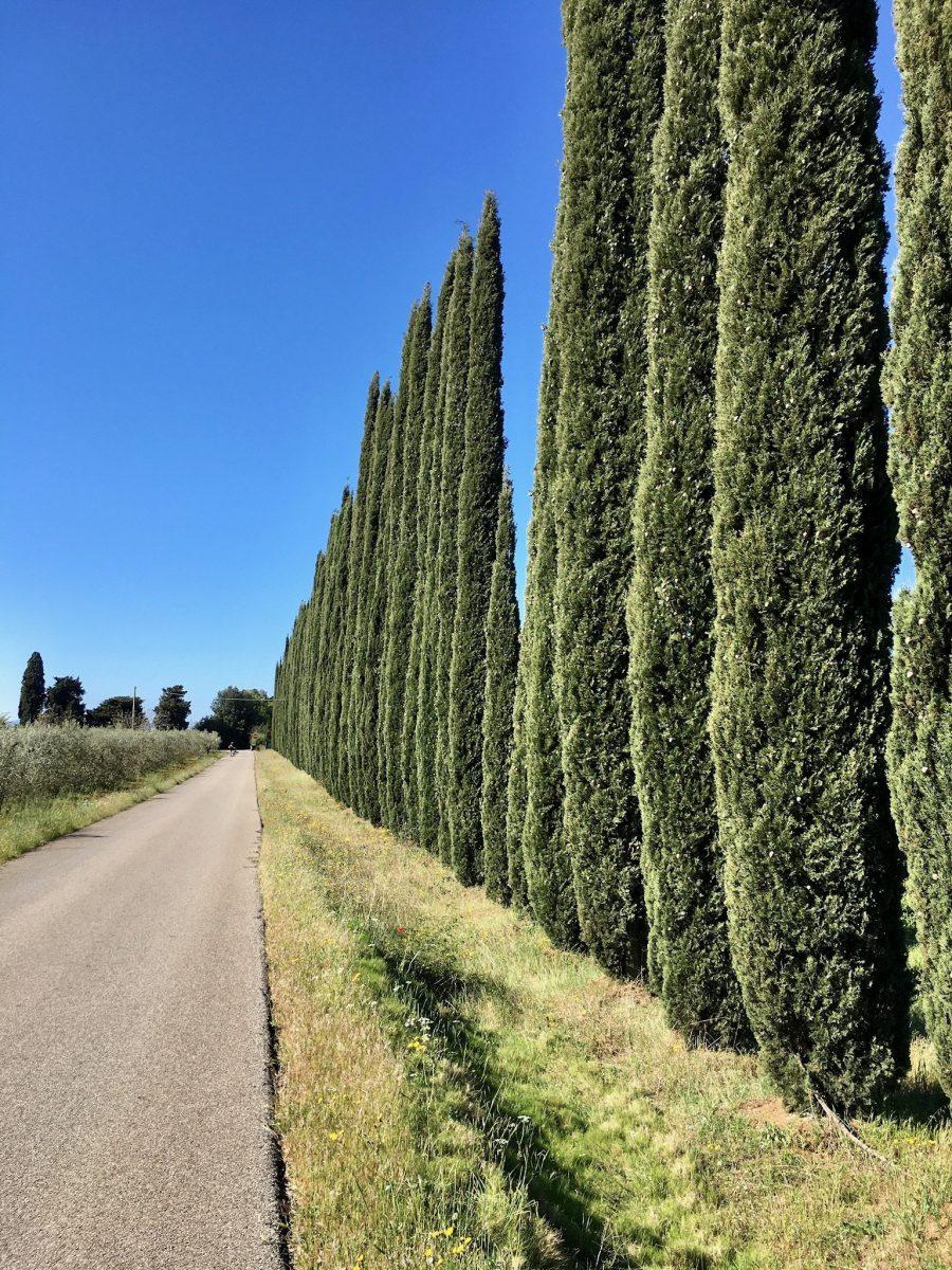 Biken zwischen Massa Marittima und Follonica